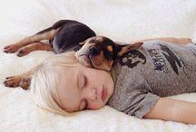 cães e c&a...