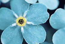 Floral Inspiration / Beautiful flower inspiration.