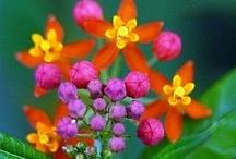 fantastic flora / by Kylea