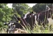 Meet Our Farmers Videos  / Our farmers are the reason why Calon Wen so special.