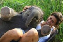 Elephant Love / Pachyderm piety