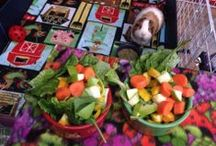 Feeding Guinea Pigs / From pellets and hay, to veggies, fruits, and treats!