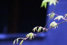 My Tokyo / My Tokyo (2015)  « Aucune route n'est longue à côté d'un Ami » – proverbe Japonais que je dédicace à Carol, Atsuko et Ikumi.  Je vais essayer de garder le plus longtemps possible cet état d'esprit afin d'avancer vers ce que décrivait si bien Hokusai : « Quand j'aurai cent dix ans, je tracerai une ligne et ce sera la vie. »  Je vous souhaite un agréable voyage !