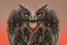 Owls and other cute animals!!