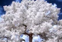 WHITE / Die Farbe WEISS - leise und ehrlich The colour white - gentle and honest