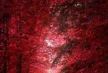 RED / Die Farbe ROT - Liebe und Sinnlichkeit The colour RED - love and sensuousness