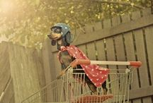 Câini Beagle / Cute