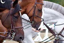 Quotes de chevaux