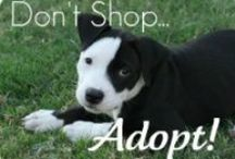 Cape May Dogs 4  Adoptions  / Doggies 4 Doggie Adoptions all over the country..adopt don;t shop.. spay and nueter please