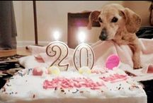Cape May Dogs Birthdays / Doggie Birthdays Celebrating their brthdays Happy Birthday