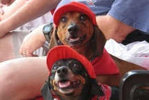 Cape May Dogs In Hats / Doggies wearing hats