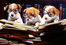 Cape May Dogs In Glasses. / Dogs wearing glasses..Dogs that like to wear glasses