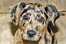 Cape May Dogs Mix Breeds / Mixed Breed Doggies