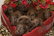 Cape May Dogs 4 Valentine's Day / dogs r love so love is dogs on valentines day show your love 4 dogs everyday
