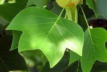 Plants :>