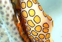 Sea life / Beautiful, inspiring sea life that makes art redundant.
