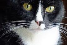 gatos / Gatos fofos S2