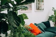 Indoor plants done well / Plants, plants, PLANTS. This board is all about how to them well indoors!
