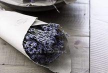 Lovely Lavender / lavender