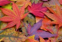 Falling for Fall / Everything related to Fall  / by Lisa Martinez