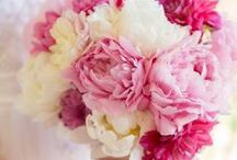 kukkia ja kukkapenkkejä