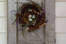 Birds & Nests / by Kim Howell