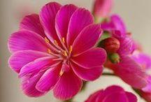 Plants: Pink