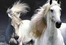Horses / They know when you're happy; They know when you're comfortable; They know when you're confident; And they always know when you have carrots ~ Author Unknown