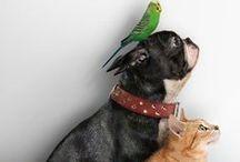 Gli Animali sono i Benvenuti! / Se partire con il pensiero di affidare i vostri amici a 4 zampe a parenti ed amici non ti va, nessun problema! Infatti all'Hotel Firenze gli animali di piccola taglia sono i benvenuti!
