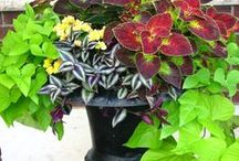 Containers and pots