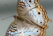Flutterbys / Fairies and Pixies in our gardens. The colourful, graceful butterfly and dragonflys