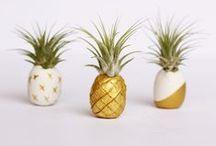 Pineapple love