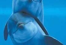 Mermaids & Dolphins