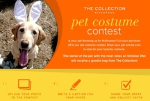 The Pet Costume Contest  / Did you know The Collection is pet-friendly? 