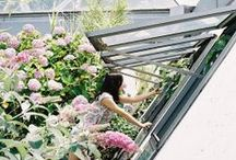 backyard / backyards, patios, balconies & rooftop terraces