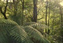 Ferns / Gardensweekly Design - ferns