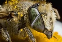 Super Macro Bee