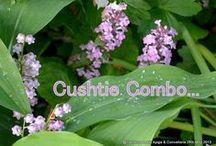 Cushtie Combos  / Combinations that work :)