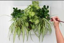 Obrazy z živých rostlin / Zahrada z jiného pohledu - vertikálně Více informací naleznete na www.zahradanastenu.cz