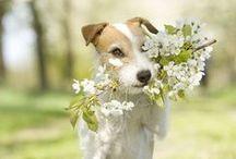 Spring ~ Seasons