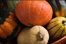 Winter Squash / From Acorns to Butternut, Delicatta to Spaghetti, most winter squash can be kept right on your counter top. Their ideal temperature is about 55-60 degrees in a dry place. Most squash should last months (except Honey Nuts) and can all be roasted, steamed or pureed.