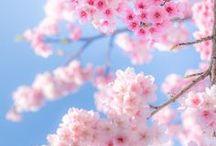 Spring ... Le printemps arrive !