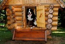 Pets - DIY & Cool Ideas / Special nooks, backyard projects, dog runs, and more.