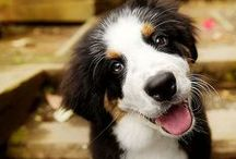 Dogs - Adorable / Adorable dogs & puppies. Cute and funny gifs, videos, and pictures. We love dogs!