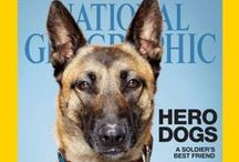 Pets - Heroes / Working dogs or just pets, trained or just following their instincts, these are the unsung heroes. Pets helping people and others.