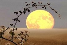 ¤¤¤ Meraviglie dal Mondo ¤¤¤ / by Luna Bulla