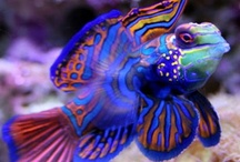 Sea life and diving