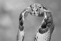 b&w animal world