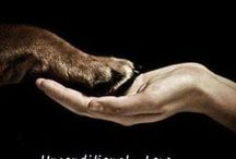 dogs with quotes <3