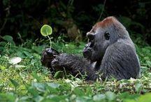 nature reference - Fauna